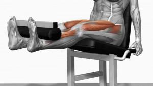 Vb. Leg Extension. Enkel activatie van de vierkoppige bovenbeenspier